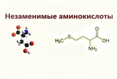 Незаменимые аминокислоты