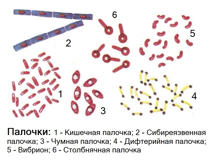 Кишечно-тифозное семейство бактерий