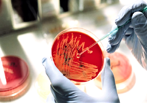 Препараты для профилактики и лечения кокковых инфекций