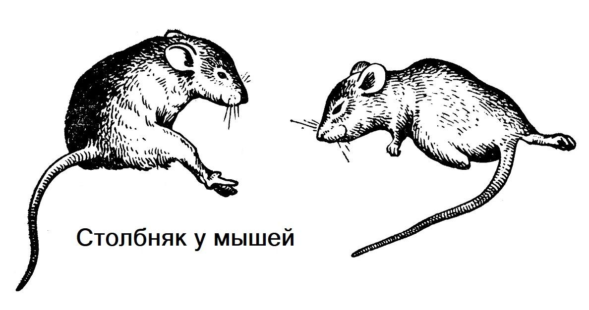 Столбняк у мышей