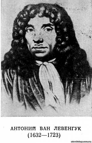 Антонием ван Левенгуком